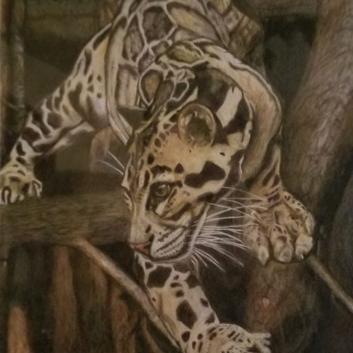 cropped-focused-clouded-leopard2.jpg